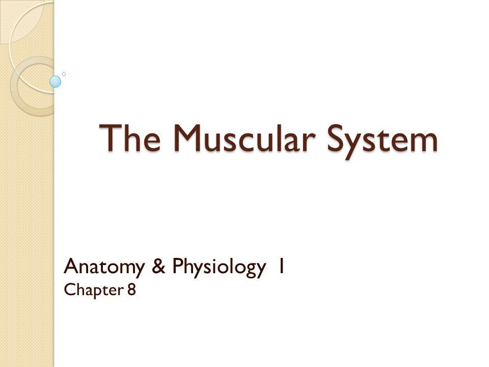 Fantastisch Kapitel 8 Anatomie Und Physiologie Bilder - Menschliche ...