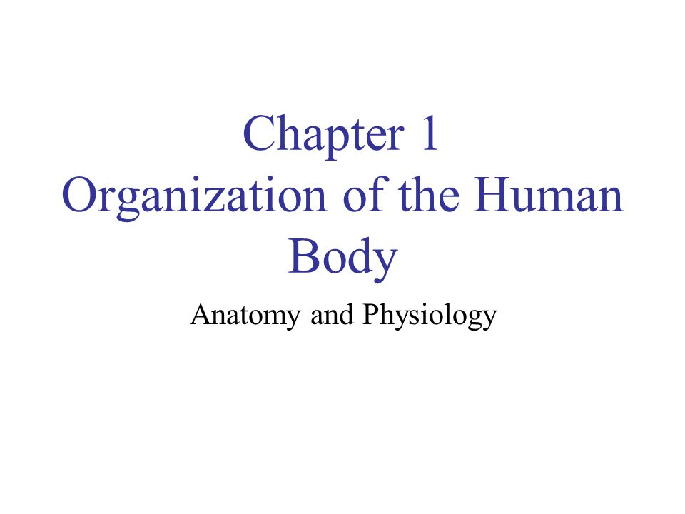 Chapter 1 Organization of the Human Body - ppt video online download