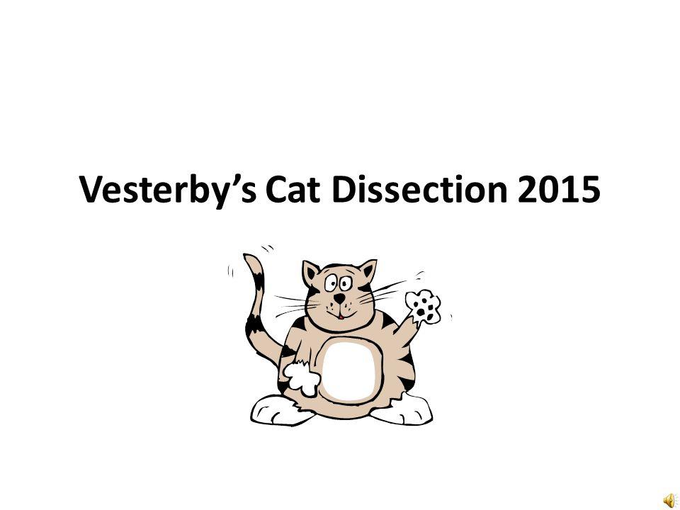 Vesterbys Cat Dissection ppt video online download – Cat Dissection Worksheet