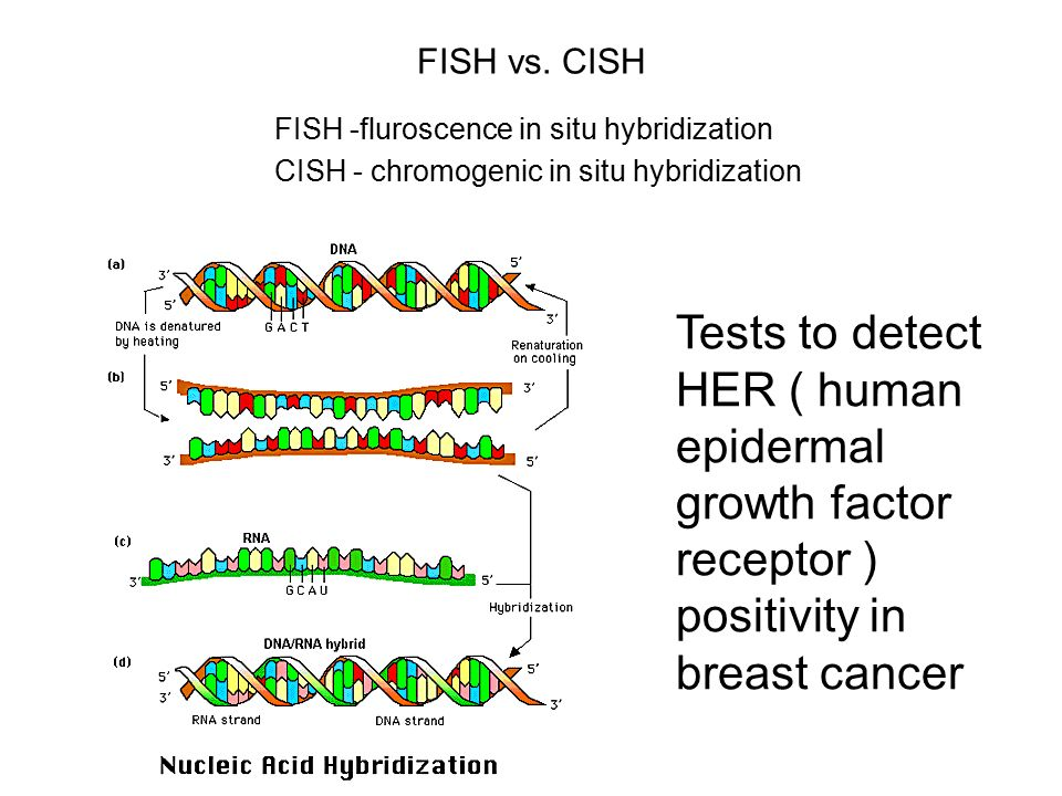 Molecular biology techniques ppt download for Fish test for cancer