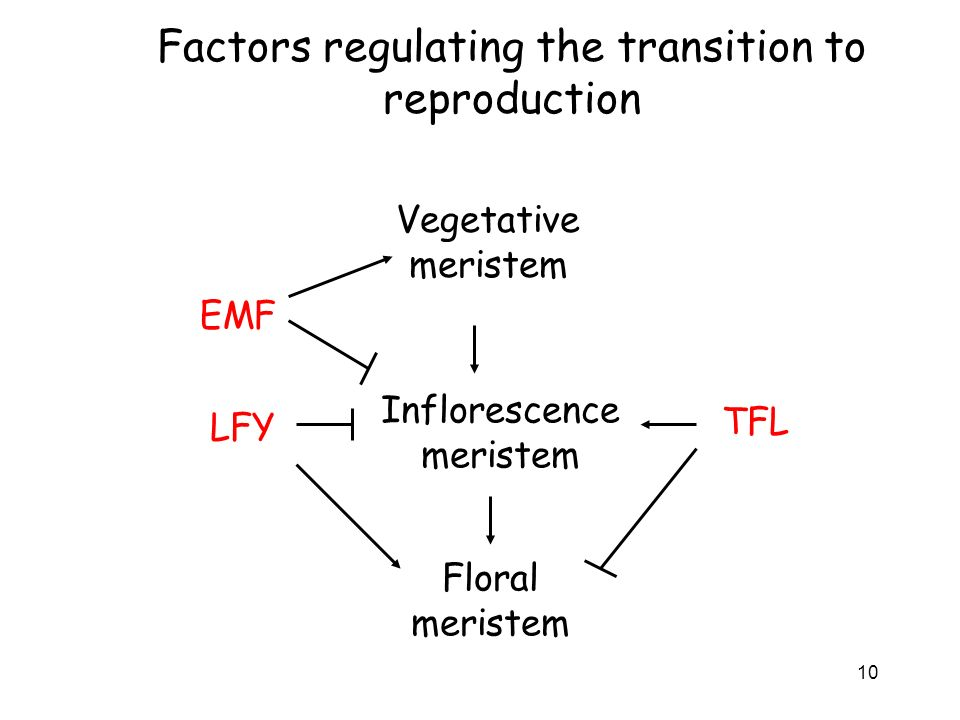 Factors regulating the transition to reproduction