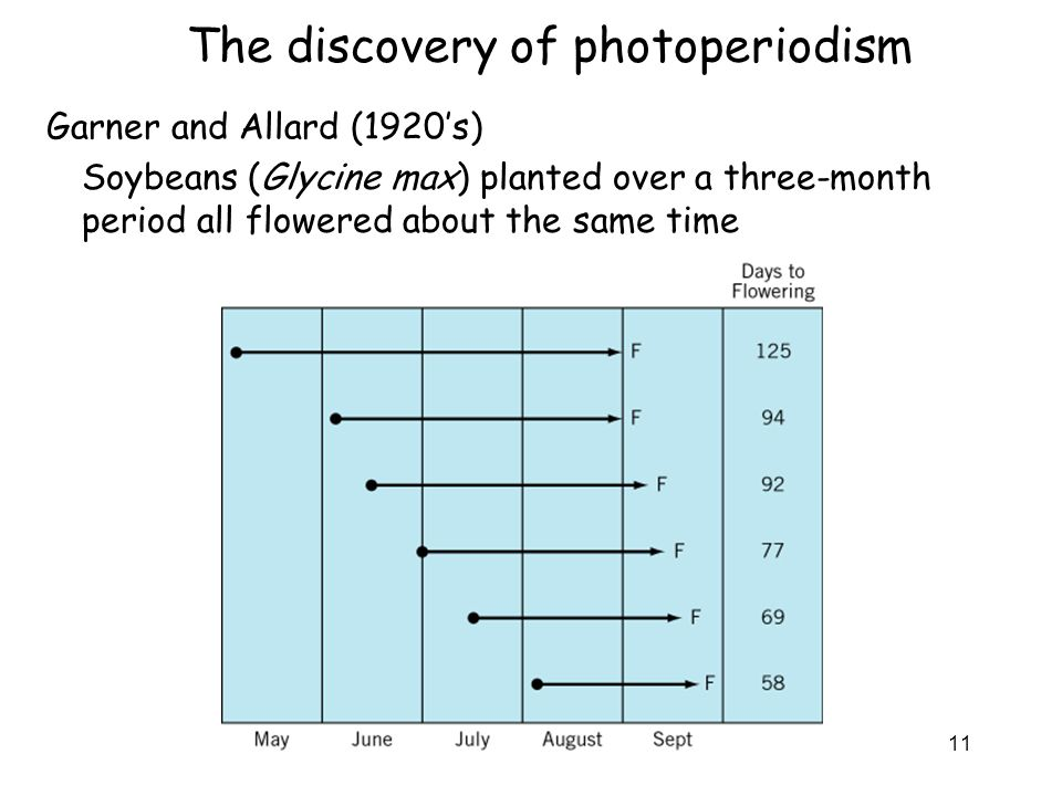 The discovery of photoperiodism