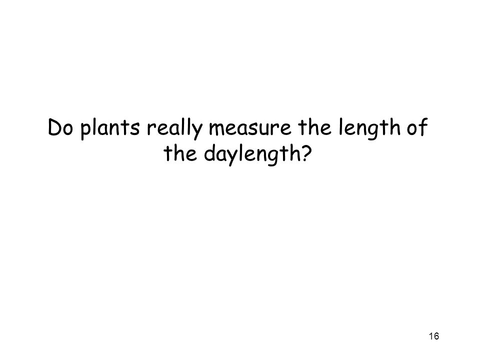 Do plants really measure the length of the daylength