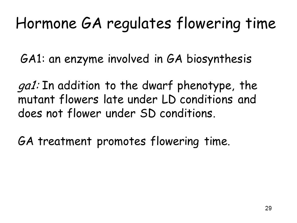 Hormone GA regulates flowering time