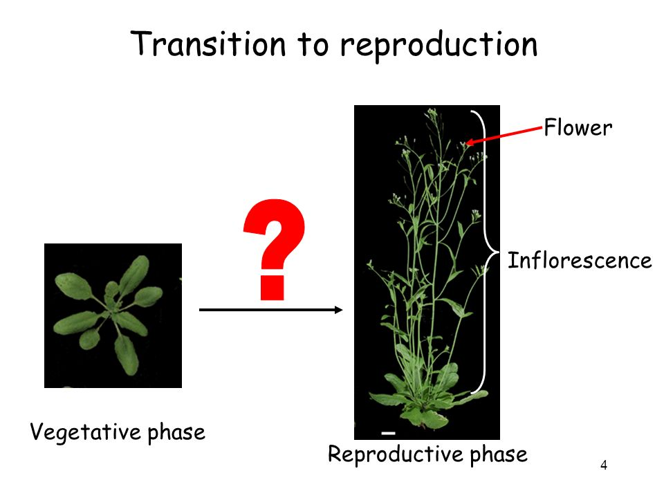 Transition to reproduction