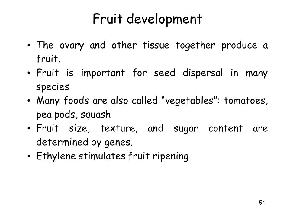 Fruit development The ovary and other tissue together produce a fruit.