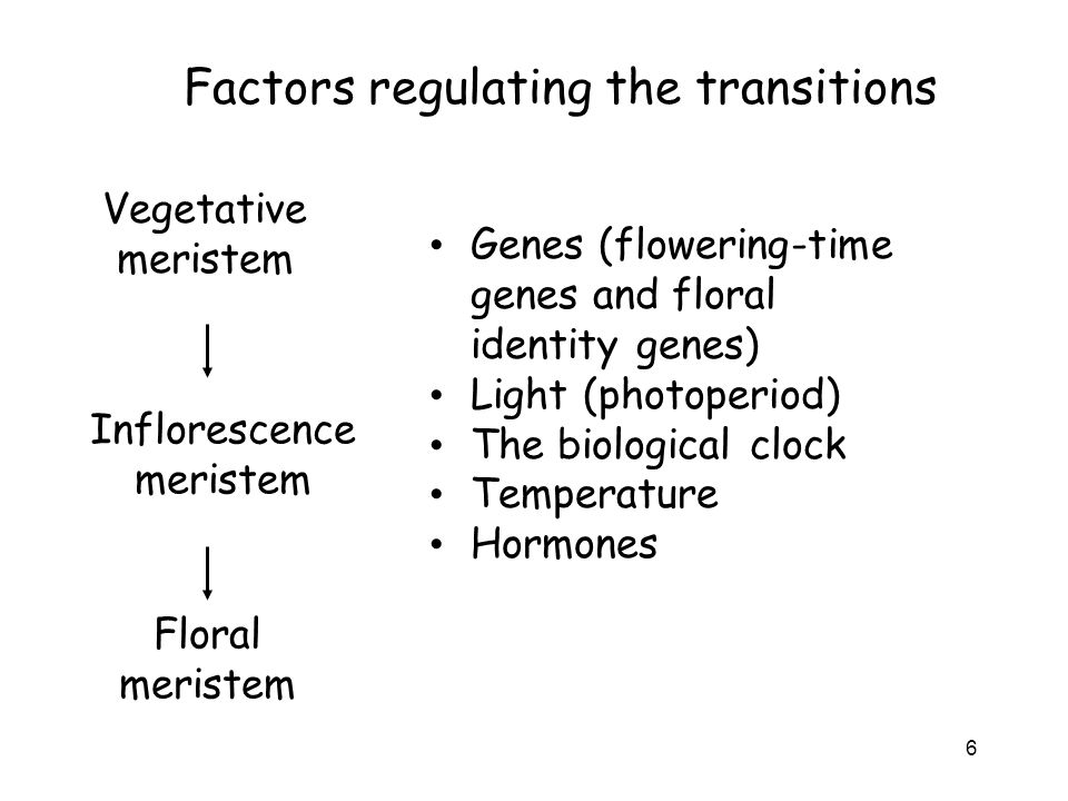 Factors regulating the transitions