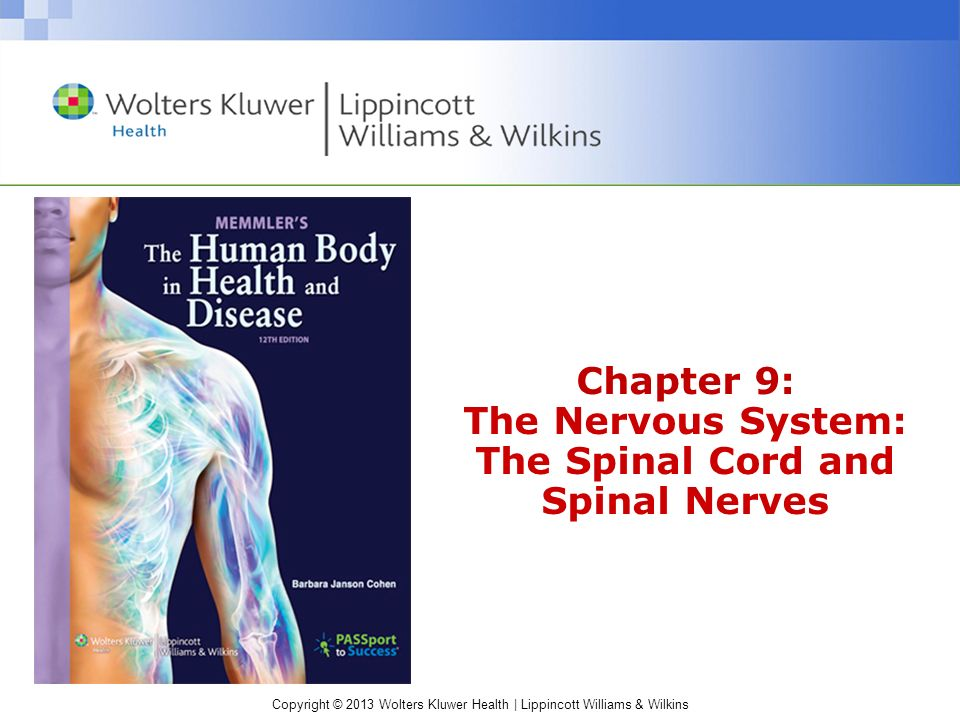 Chapter 9: The Nervous System: The Spinal Cord and Spinal Nerves ...