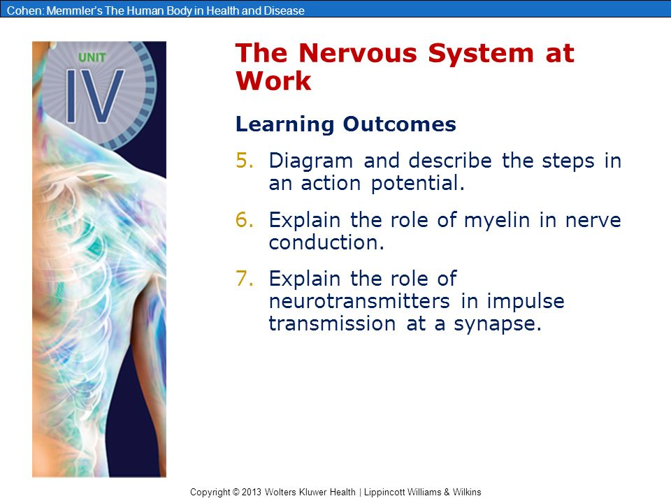 describe the conduction of action potentials and activation of neurotransmitters