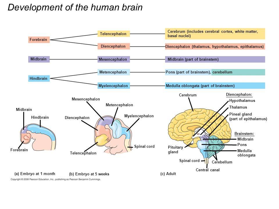 Medicine to improve memory image 5