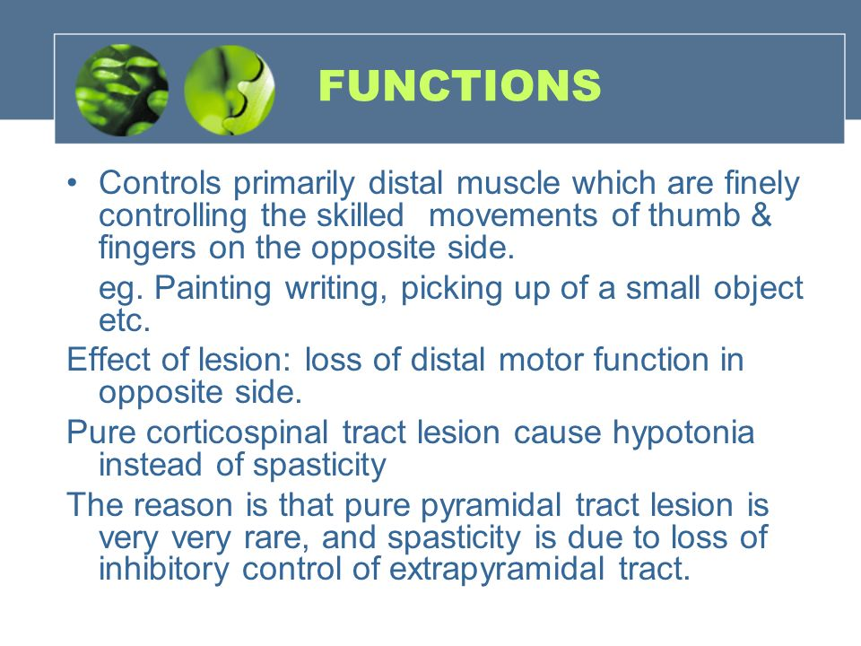 Motor areas pyramidal extrapyramidal system ppt video for Loss of motor control
