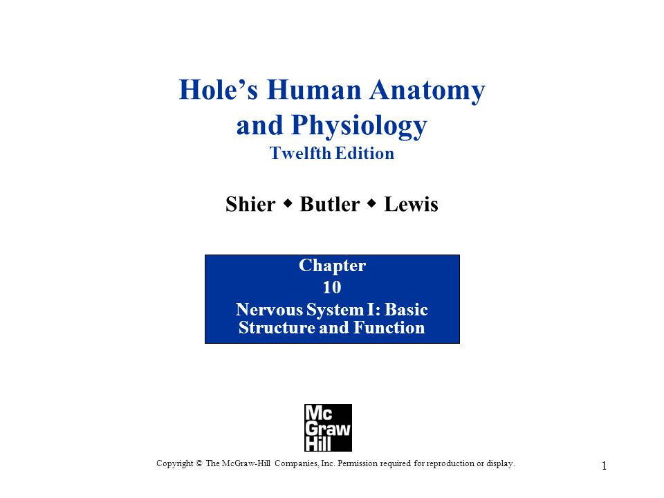 Chapter 10 Nervous System I: Basic Structure and Function - ppt ...