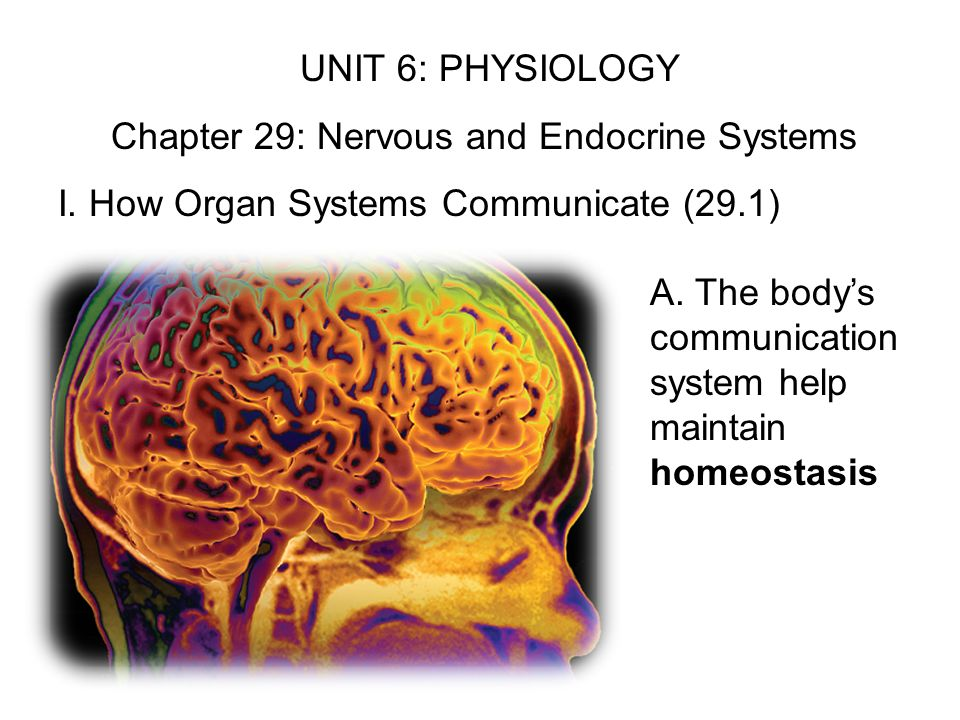 Chapter 29: Nervous and Endocrine Systems