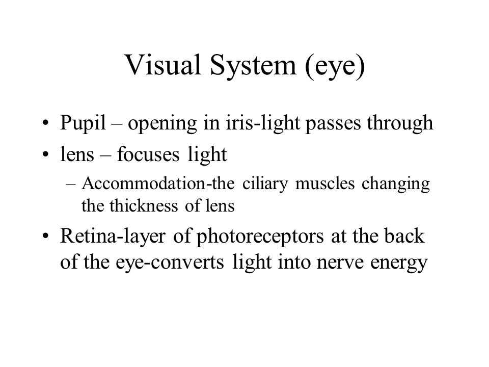 Visual System (eye) Pupil – opening in iris-light passes through