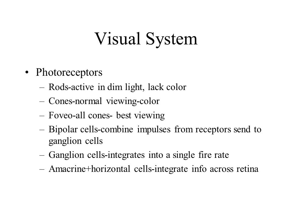Visual System Photoreceptors Rods-active in dim light, lack color