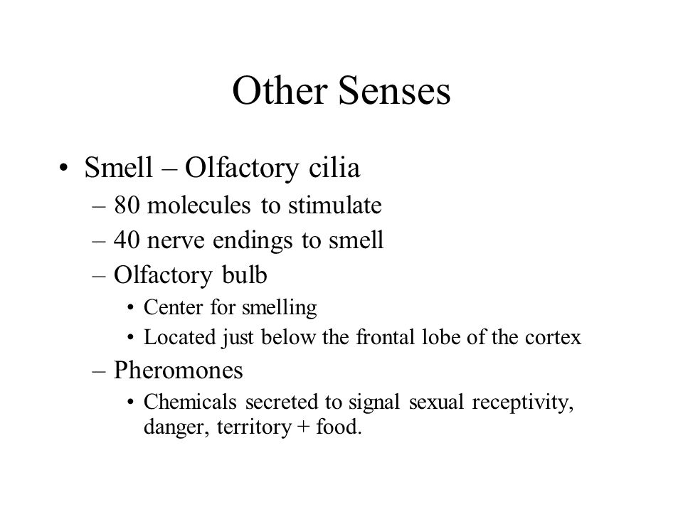 Other Senses Smell – Olfactory cilia 80 molecules to stimulate