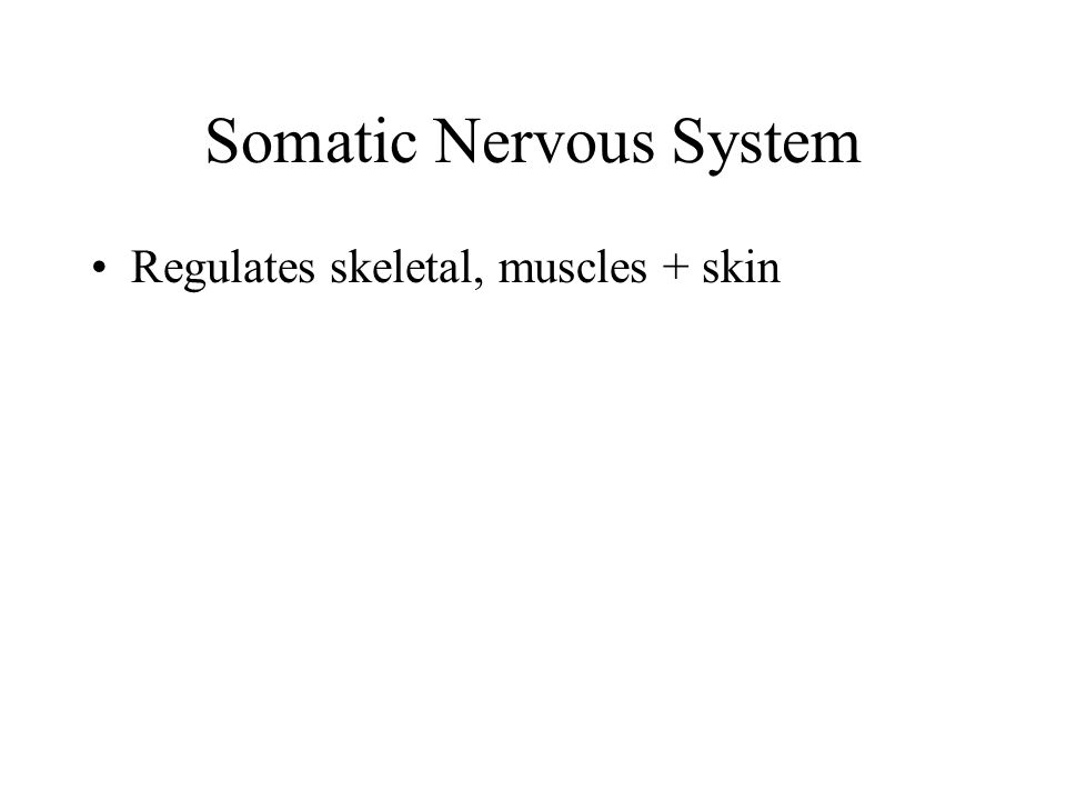 Somatic Nervous System