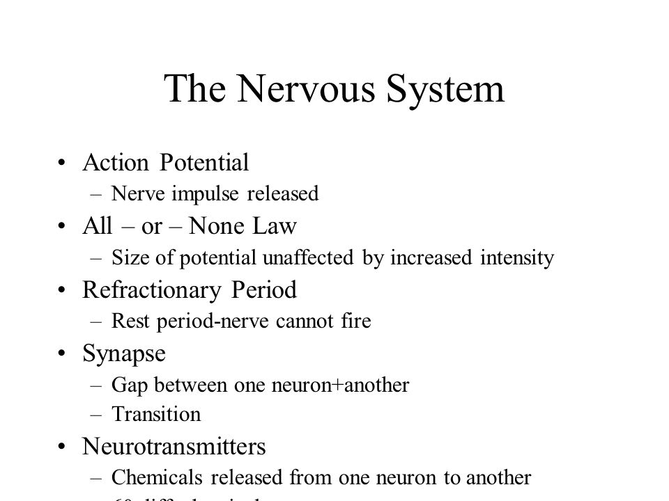 The Nervous System Action Potential All – or – None Law