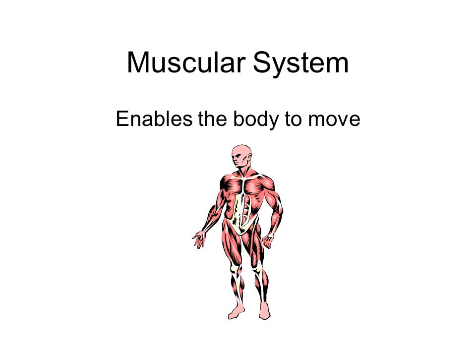 Enables the body to move