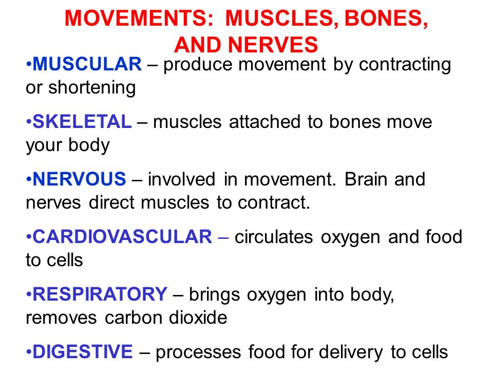 MOVEMENTS: MUSCLES, BONES, AND NERVES