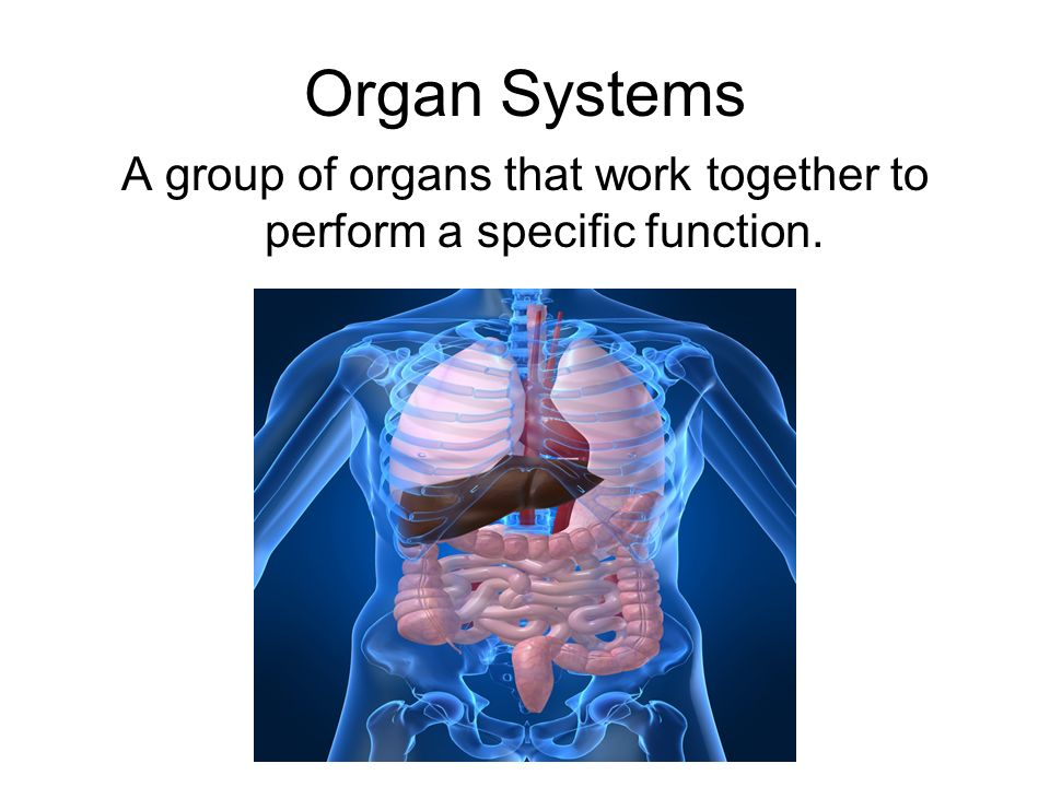 A group of organs that work together to perform a specific function.