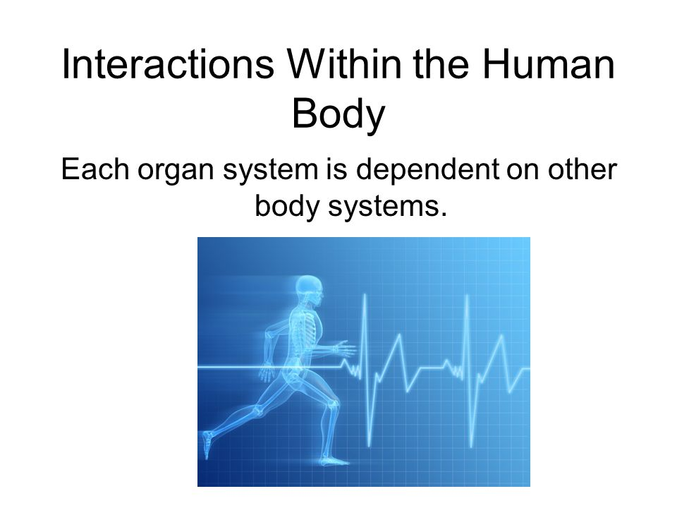 Interactions Within the Human Body