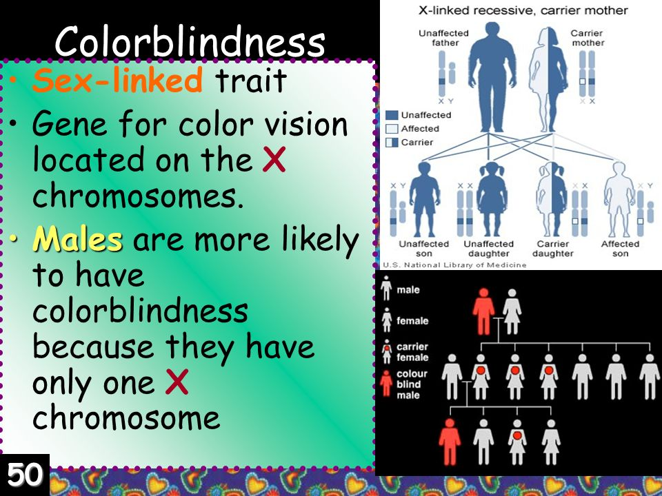 Color Blindness Sex Linked Trait 121