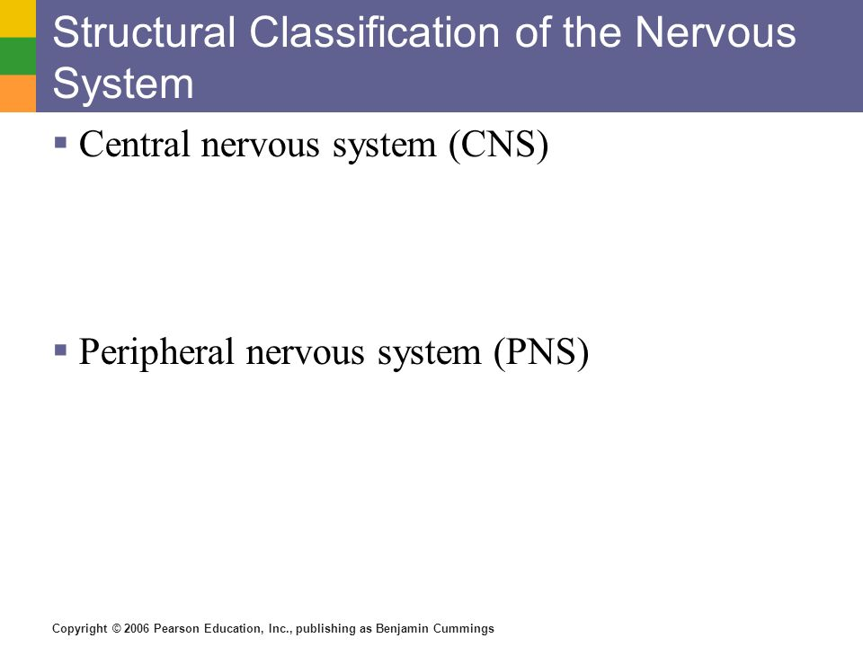 Structural Classification of the Nervous System