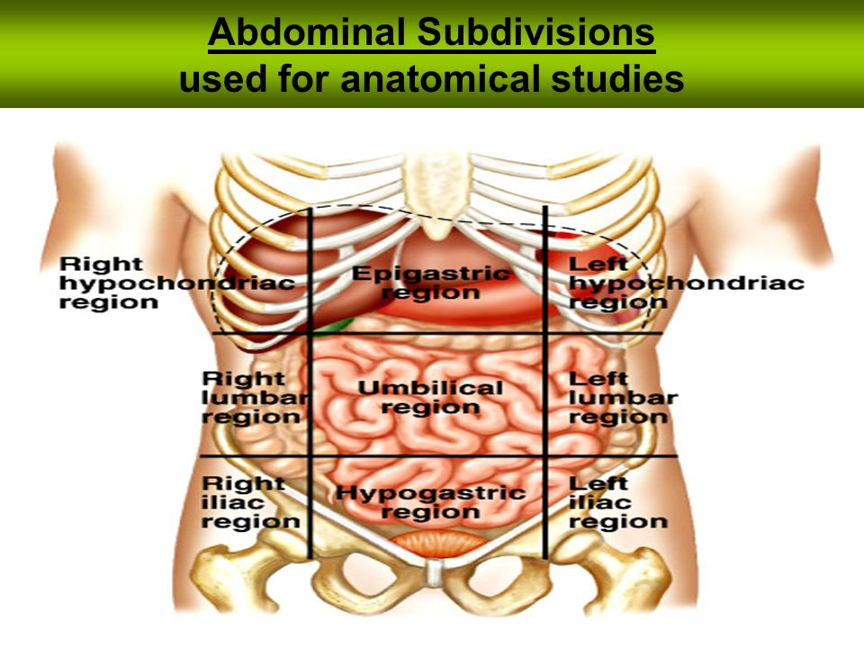 Abdominal Subdivisions used for anatomical studies