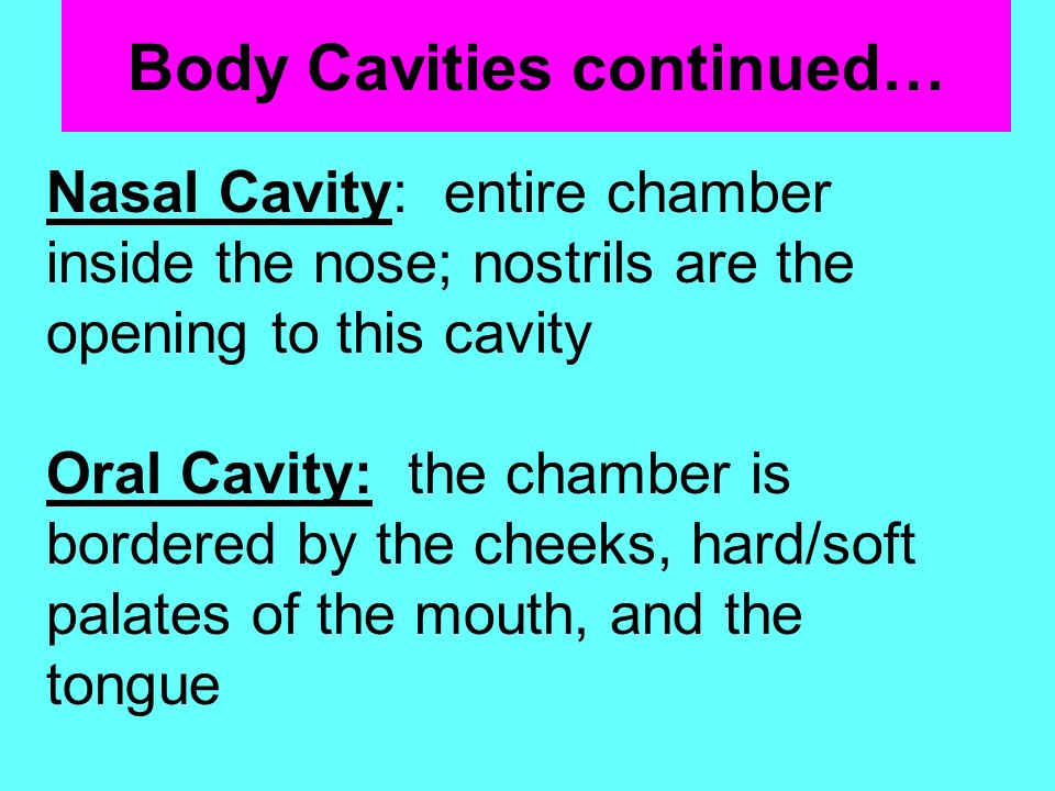 Body Cavities continued…