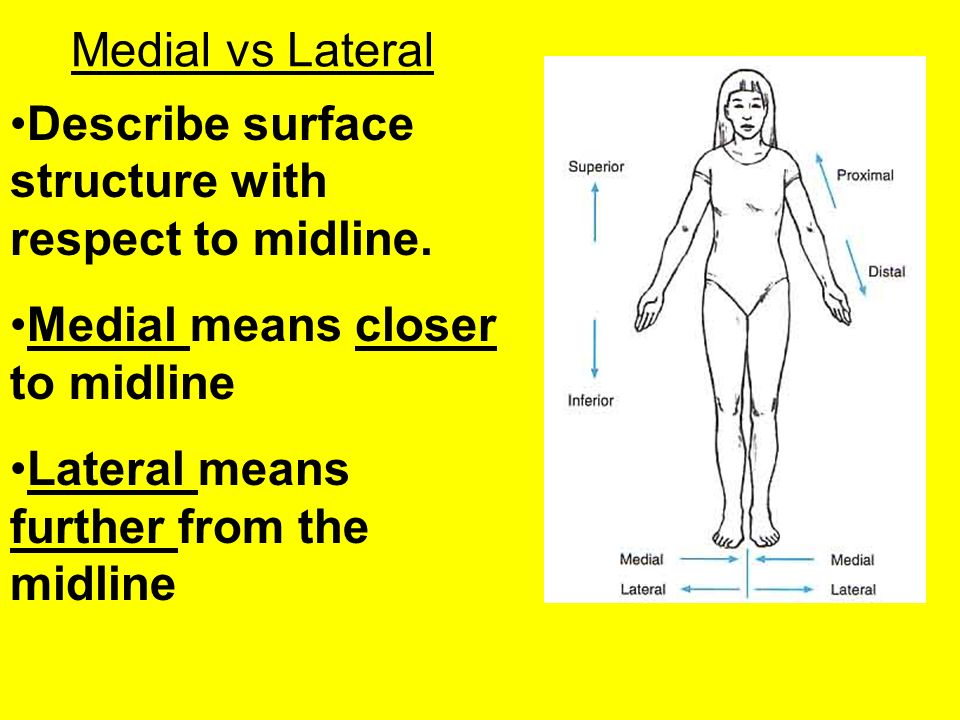 Medial vs Lateral Describe surface structure with respect to midline. Medial means closer to midline.
