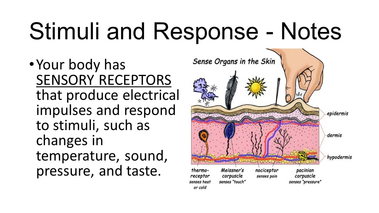 Stimuli and Response - Notes