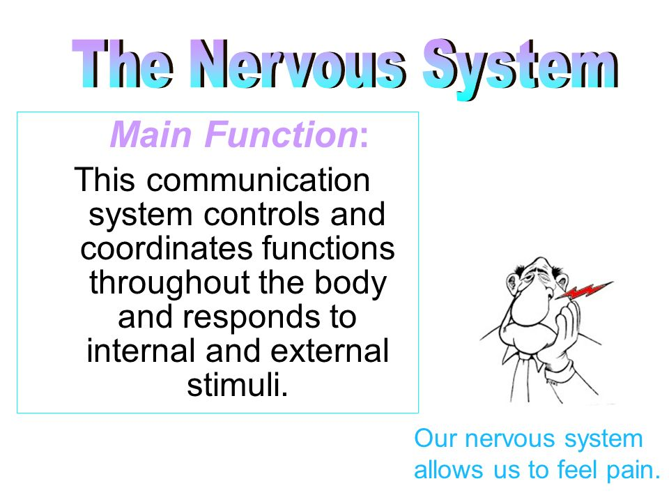 The Nervous System Main Function: