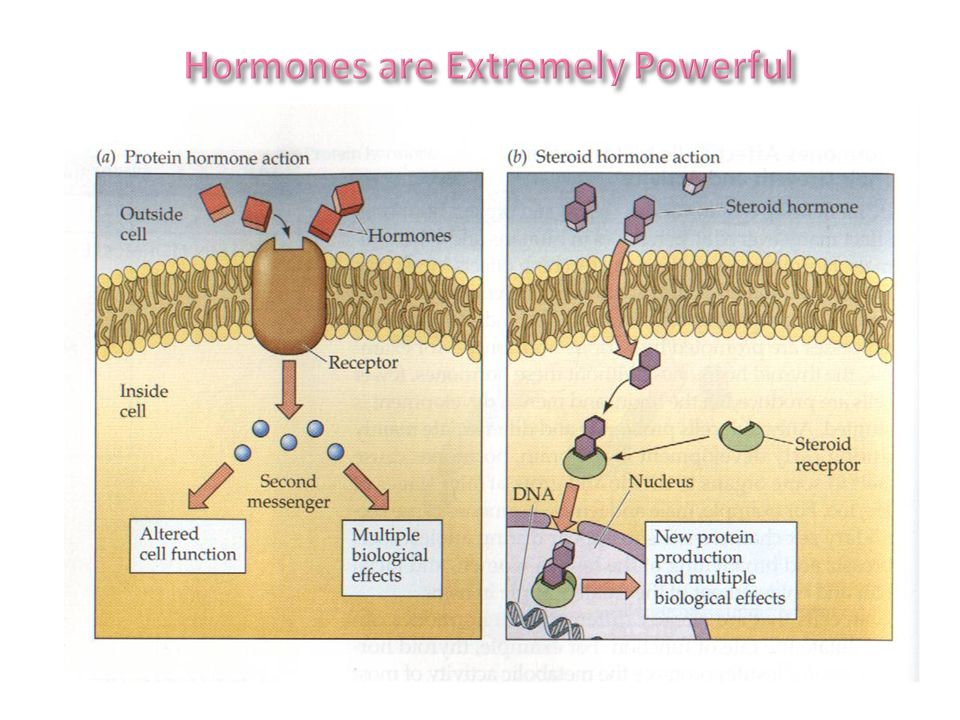 Hormones are Extremely Powerful