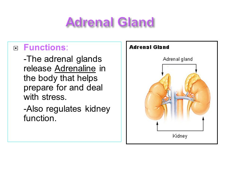 Adrenal Gland Functions: