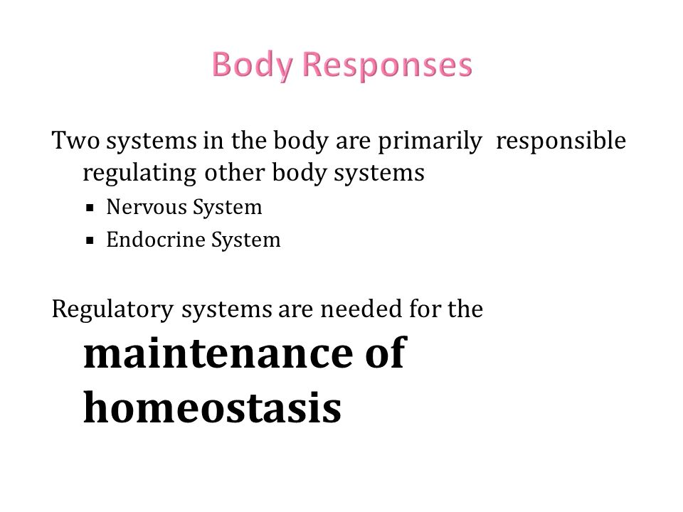 Body Responses Two systems in the body are primarily responsible regulating other body systems. Nervous System.