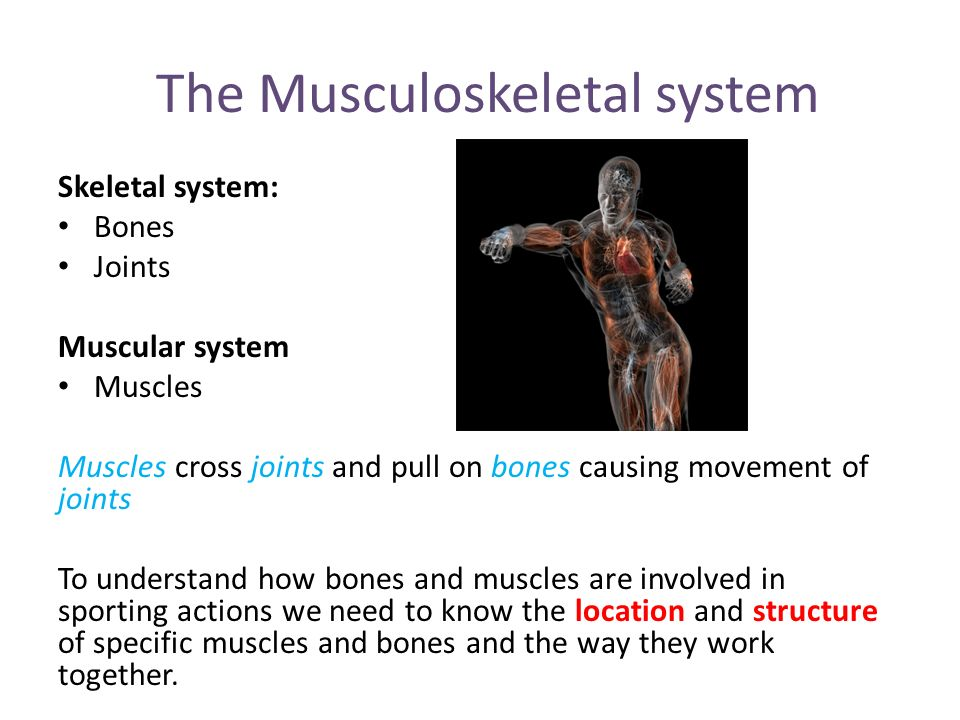 Introduction To Musculoskeletal Anatomy Ppt Video Online Download