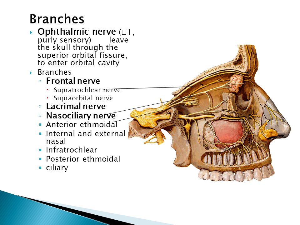 Branches Ophthalmic nerve (Ⅴ1, purly sensory) leave the skull through the superior orbital fissure, to enter orbital cavity.
