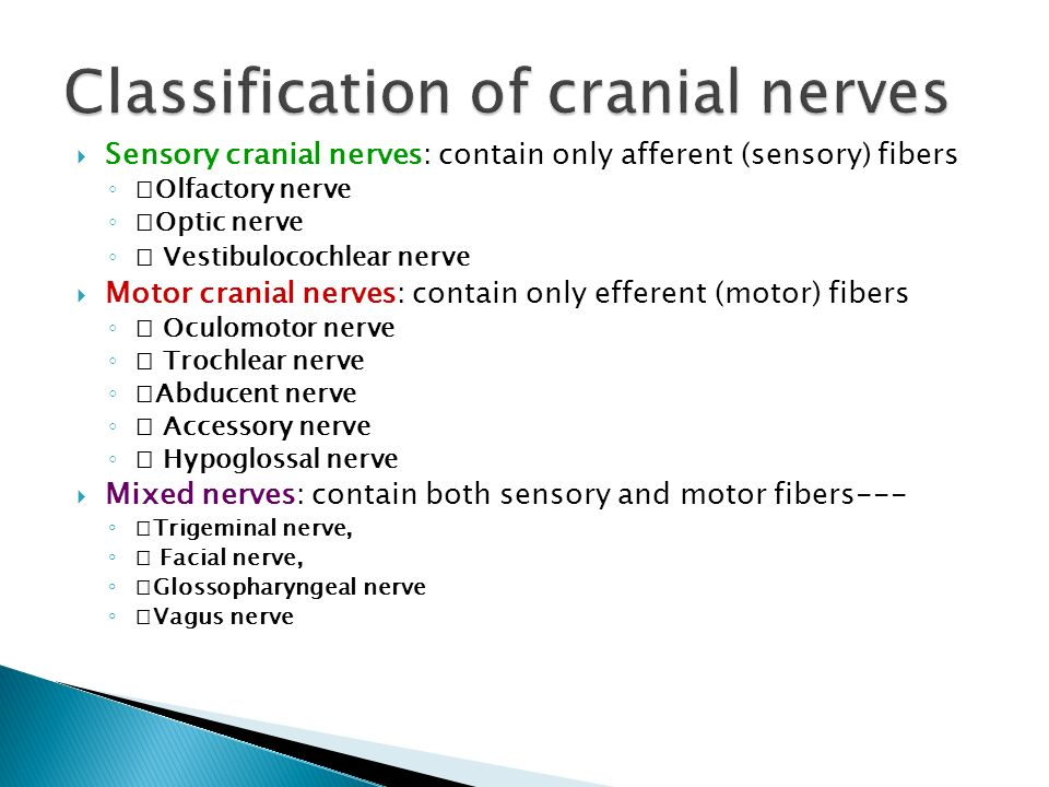 Classification of cranial nerves