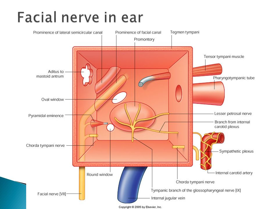Facial nerve in ear
