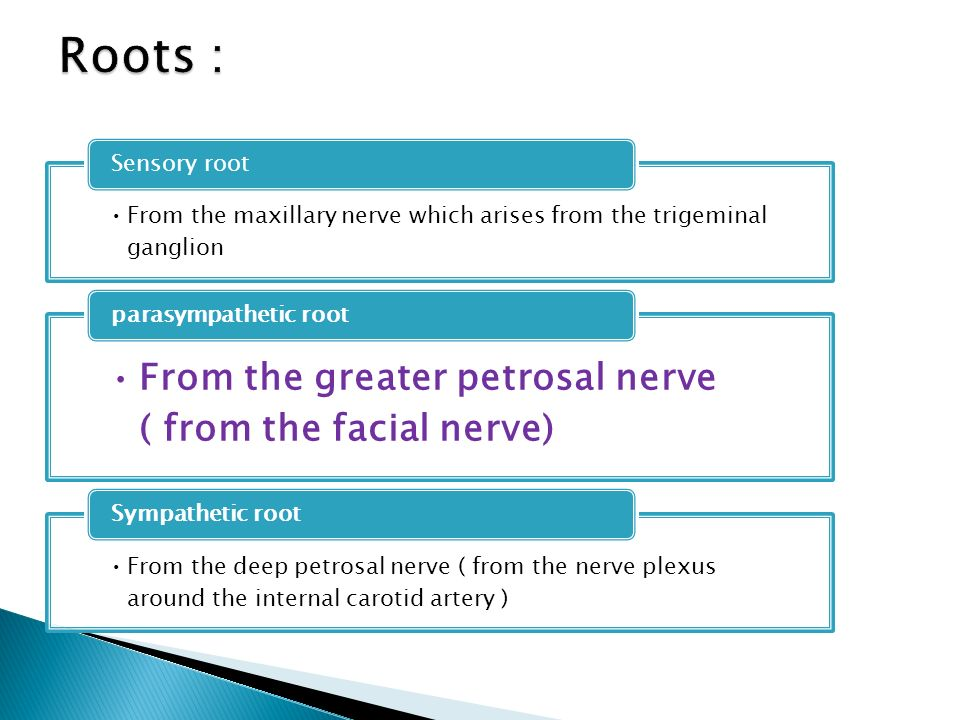 Roots : From the greater petrosal nerve ( from the facial nerve)