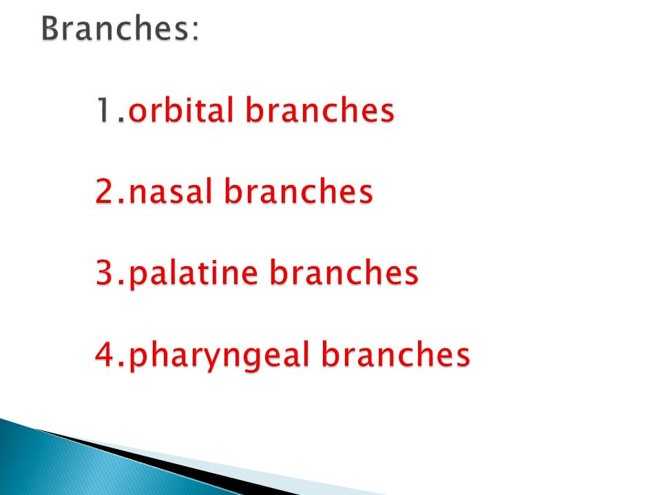 Branches: 1. orbital branches 2. nasal branches 3. palatine branches 4