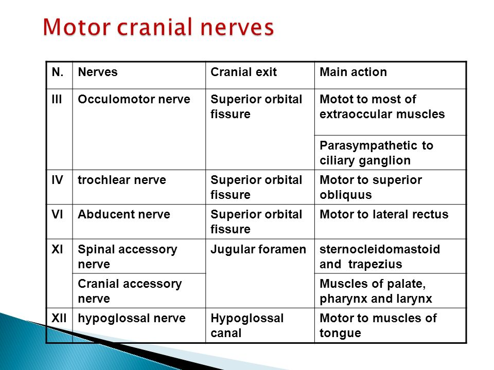 Motor cranial nerves N. Nerves Cranial exit Main action III