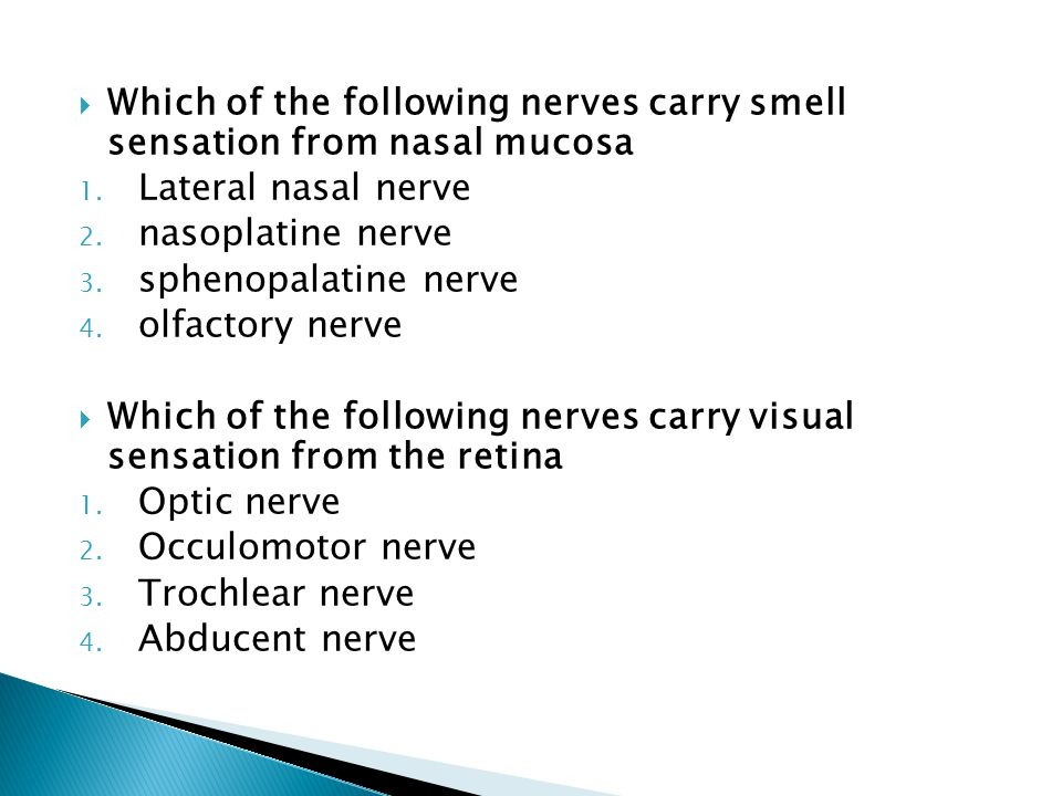 Which of the following nerves carry smell sensation from nasal mucosa