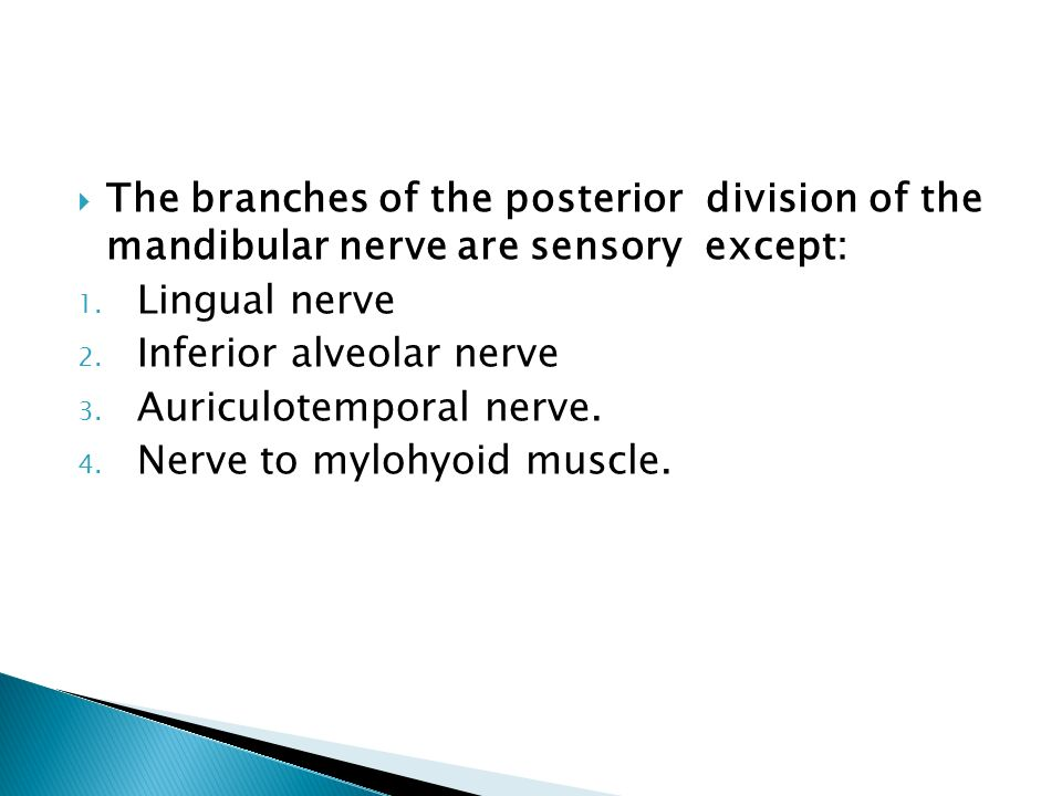 The branches of the posterior division of the mandibular nerve are sensory except: