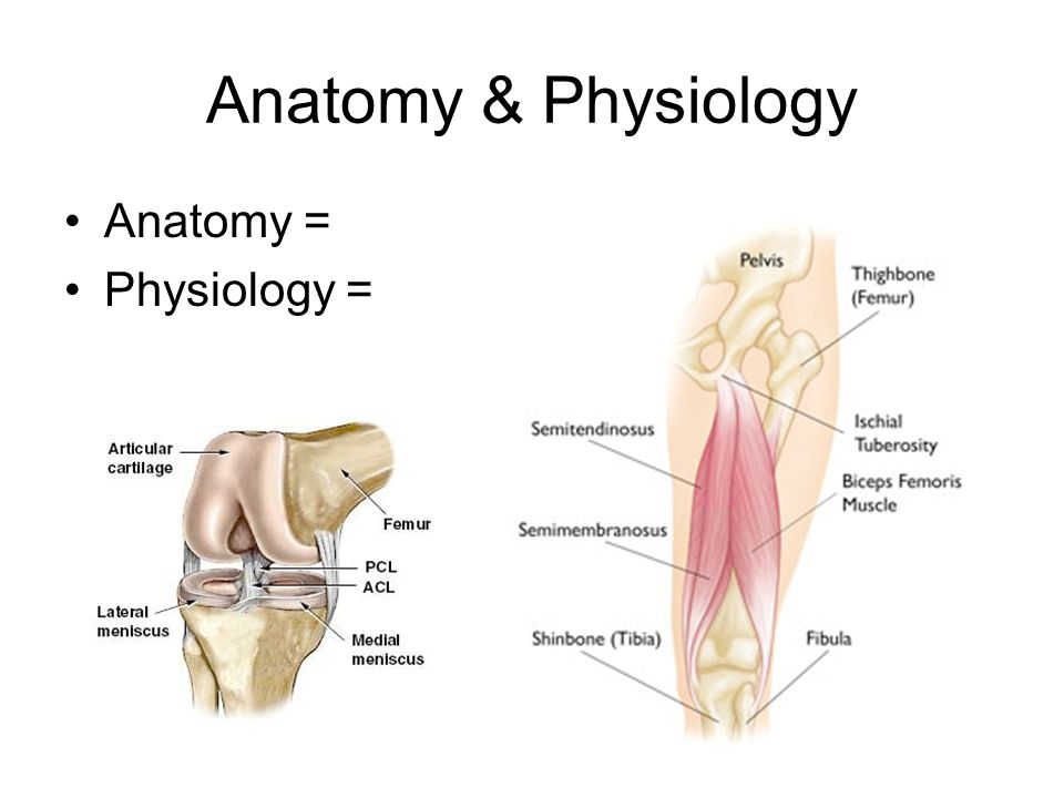 Introduction to Human Anatomy & Physiology - ppt download
