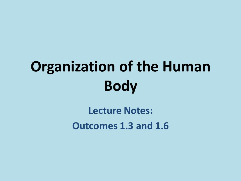 the organization of the human body The human body is studied at different levels of organization the first level is an atom which is composted of chemicals made up of submicroscopic particles the atoms then join to form molecules, which then join to form macromolecules.