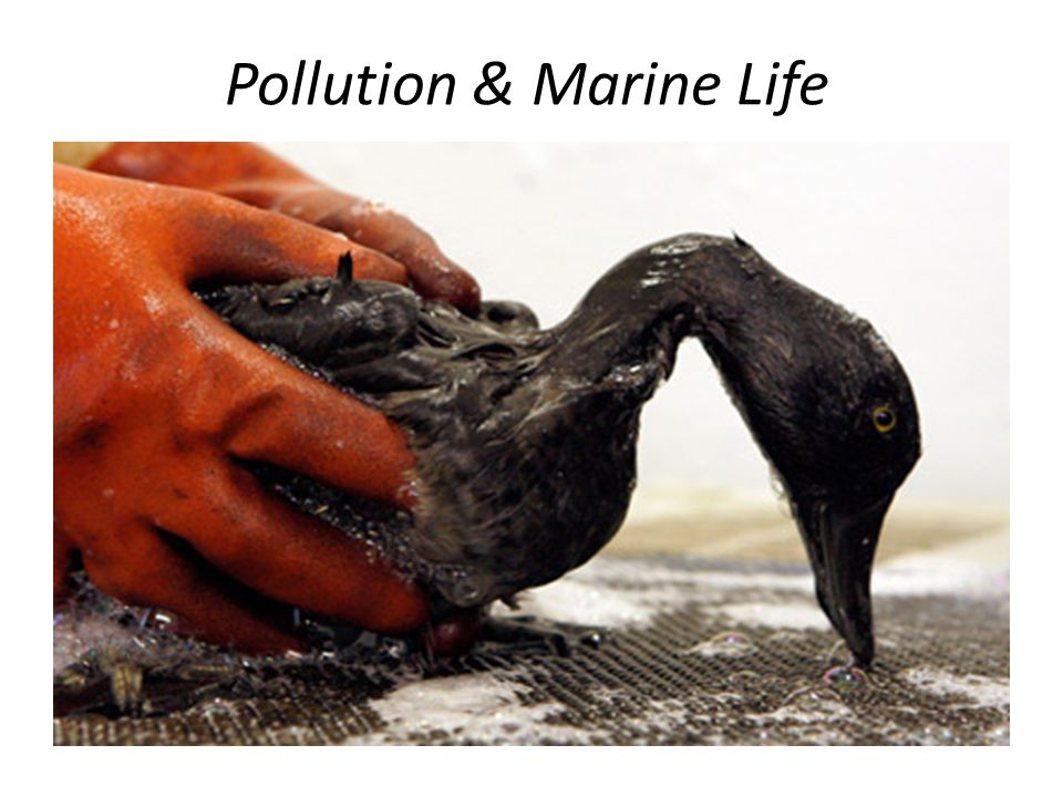 Pollution & Marine Life