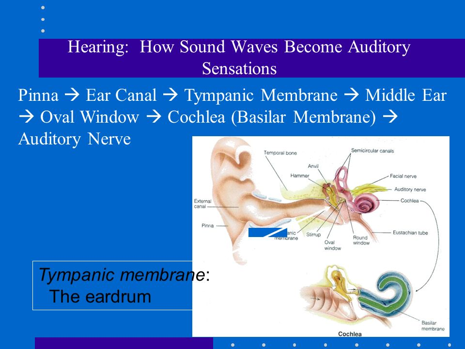 auditory sensations essay Have to write 1200 word essay on sensation including, explenation of threshold, ways to measure, experamint, why i chose that method and putting results in context help (measure auditory sensation.