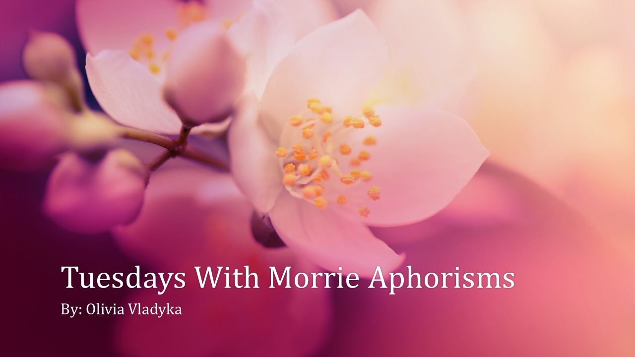 aphorisms in tuesdays with morrie essay